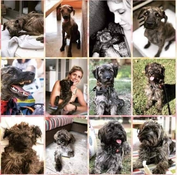canine:pasted:20190809-075436.png