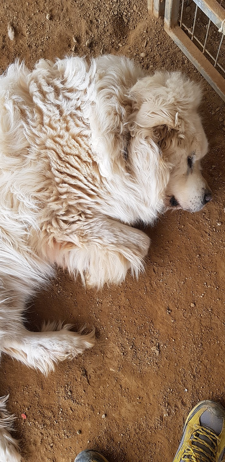 canine:stray_dogs:pasted:20190416-120551.png