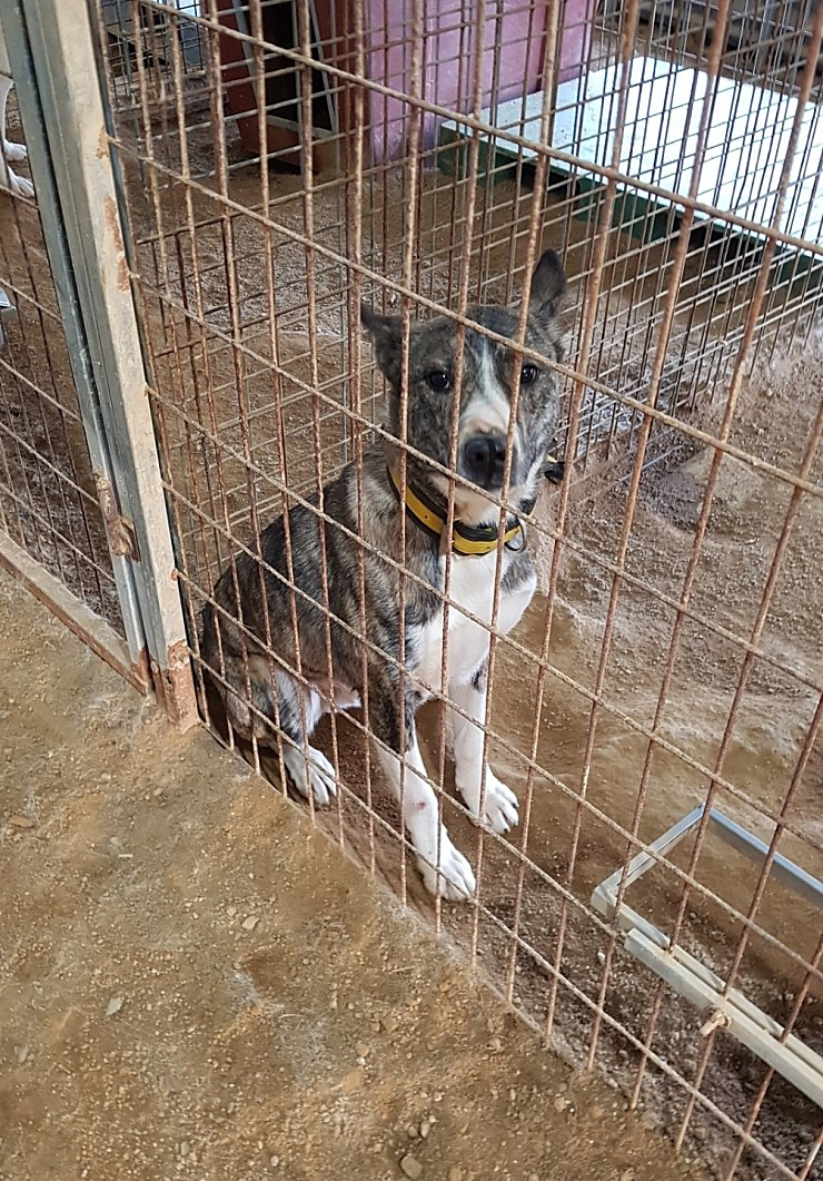 canine:stray_dogs:pasted:20190416-120948.png
