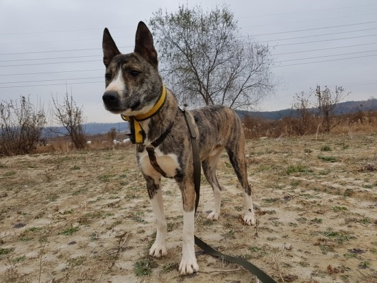 canine:stray_dogs:pasted:20190416-121220.png