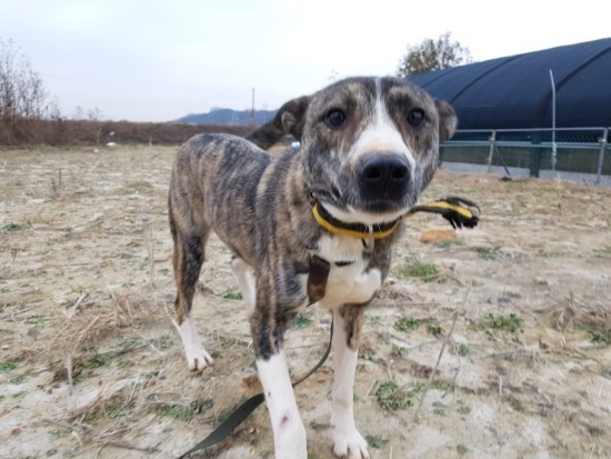 canine:stray_dogs:pasted:20190416-121245.png
