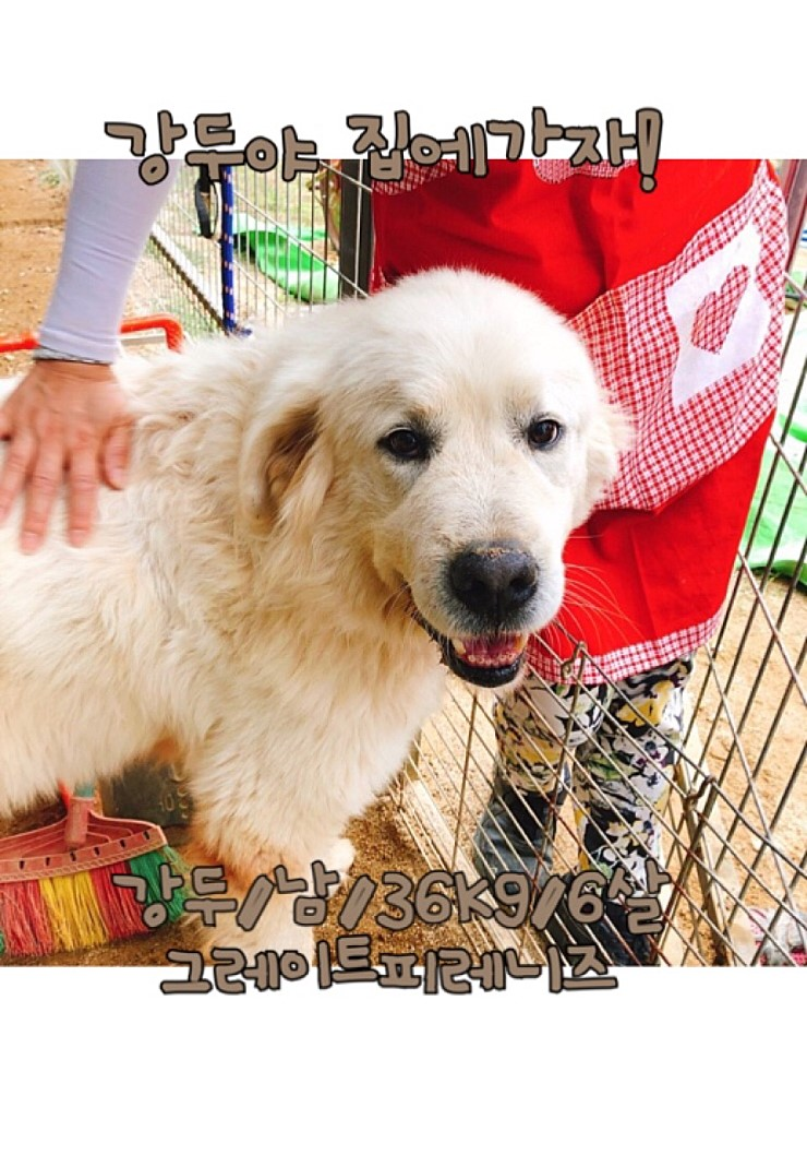 canine:stray_dogs:pasted:20190417-155234.png