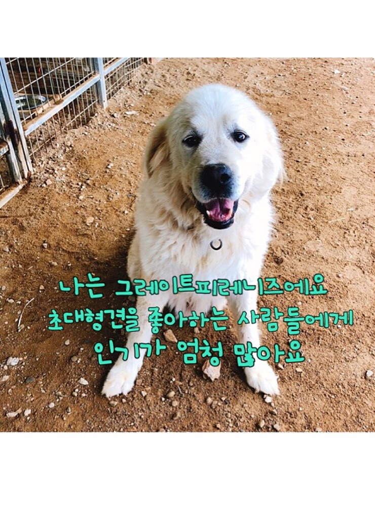 canine:stray_dogs:pasted:20190417-155258.png
