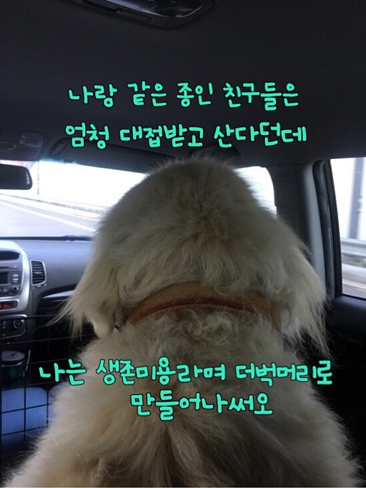 canine:stray_dogs:pasted:20190417-155309.png