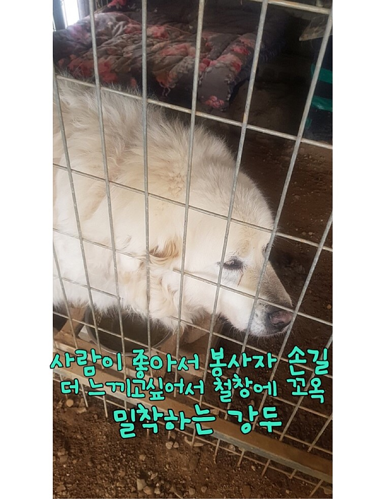 canine:stray_dogs:pasted:20190417-155326.png
