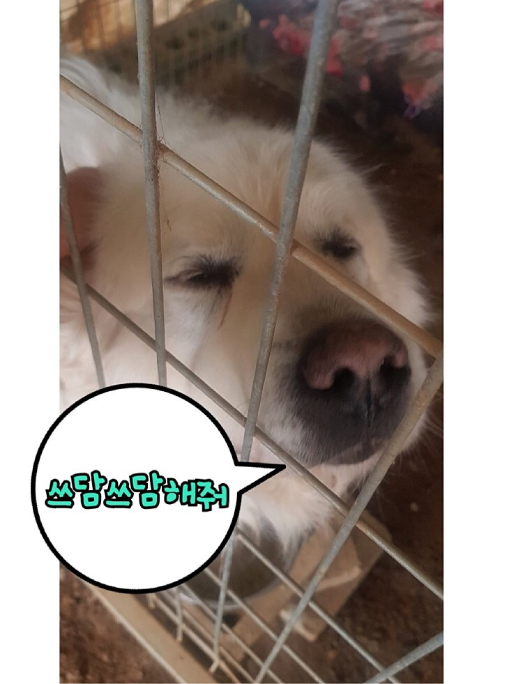 canine:stray_dogs:pasted:20190417-155340.png