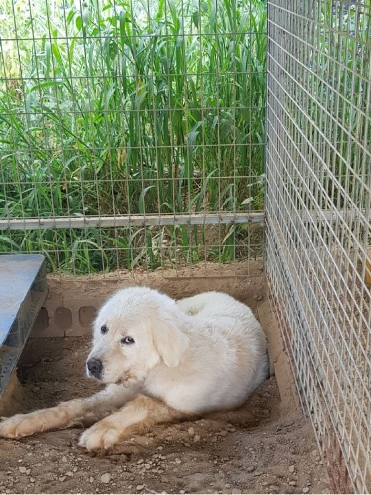 canine:stray_dogs:pasted:20190417-155351.png
