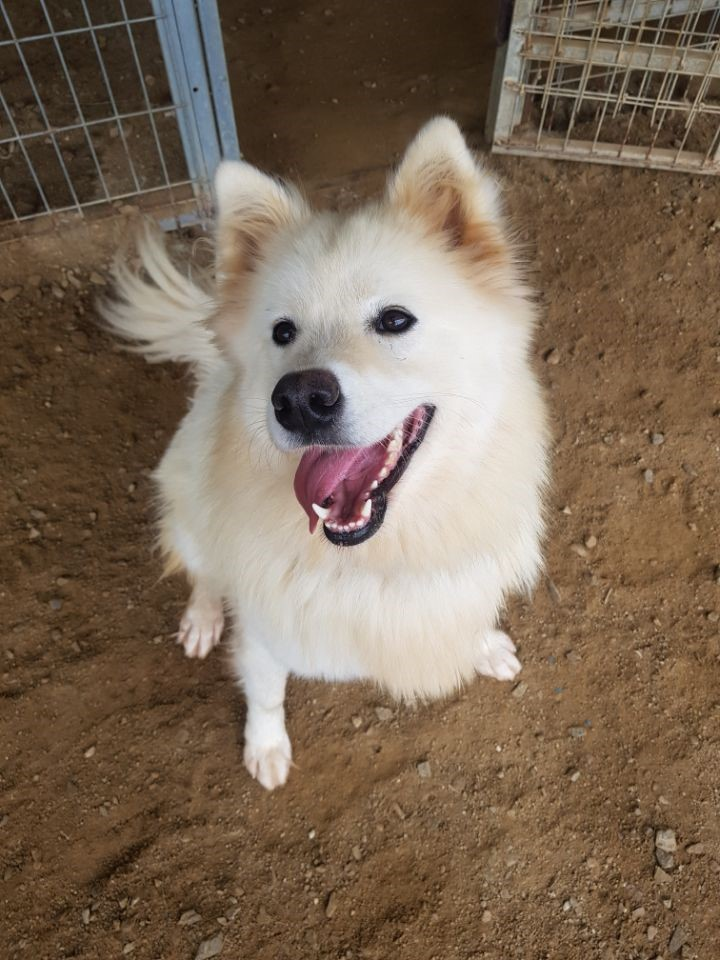 canine:stray_dogs:pasted:20190417-234630.png